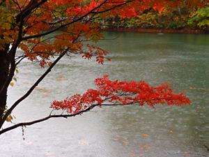 山形蔵王 ドッコ沼の紅葉