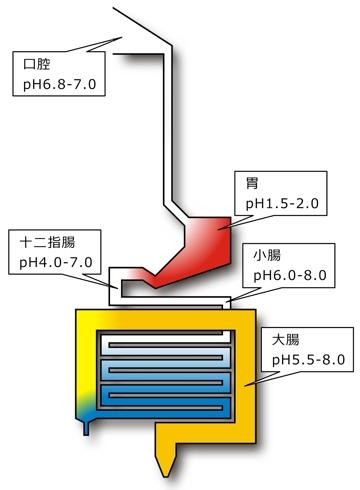 胃腸消化器pH