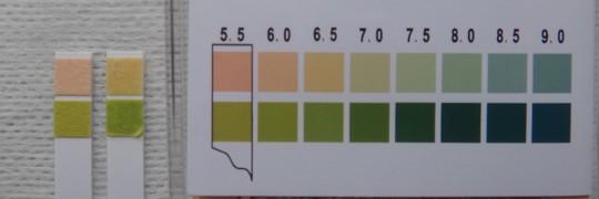 写真5 尿のpH測定結果(左:ブランク、右:中間尿)