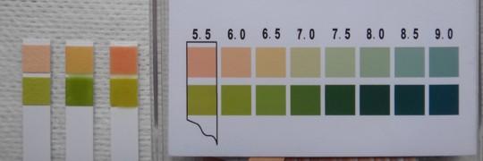 写真4 ストーマパウダー1%水溶液pH測定結果(左から、ブランク、ブラバパウダー、バリケアパウダー)