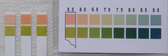写真8 面板溶解液pH測定結果(左から、ブランク、ホリスター ニューイメージFWF、ダンサック ノバ1)
