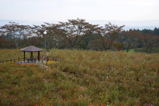 コスモス園(松山御本丸公園)