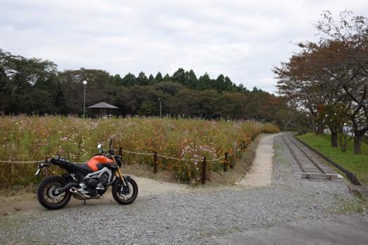 MT-09松山御本丸公園にて