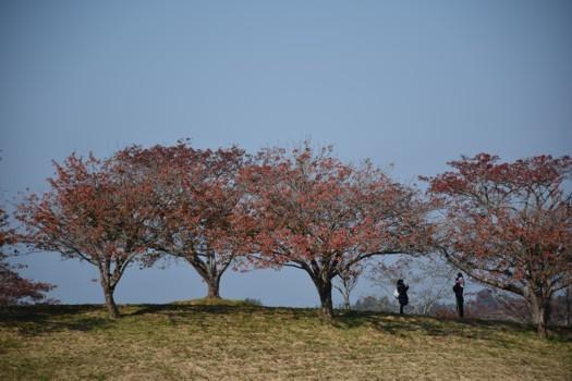 長沼フートピア公園の丘で写真を撮る親子