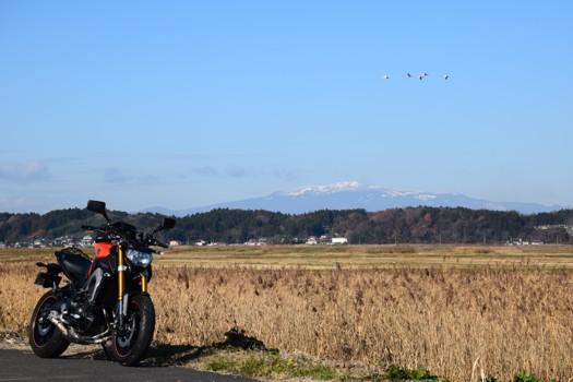 伊豆沼から臨む栗駒山と白鳥