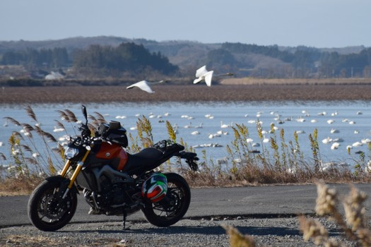 flying swan and YAMAHA MT-09