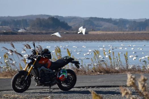 flying swan and YAMAHA MT-09