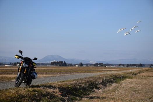 薬莱山を背景に白鳥とMT-09