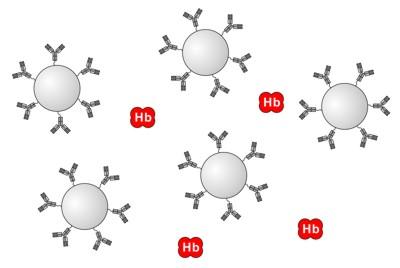 ヒトHb抗体固定化ラテックスとヘモグロビン