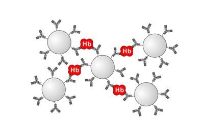 ヘモグロビンによるヒトHb抗体固定化ラテックスの凝集