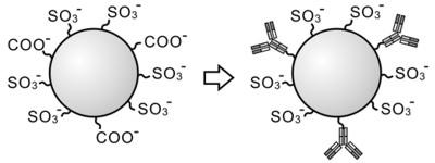 抗体固定化ラテックス粒子