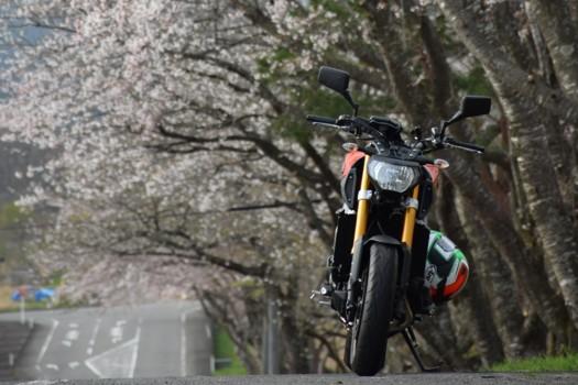 薬莱山の桜とYAMAHA MT-09