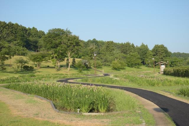 7月のみなみかた花菖蒲の郷公園内