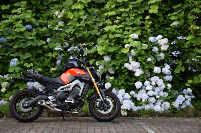 牛渕公園の紫陽花とMT-09