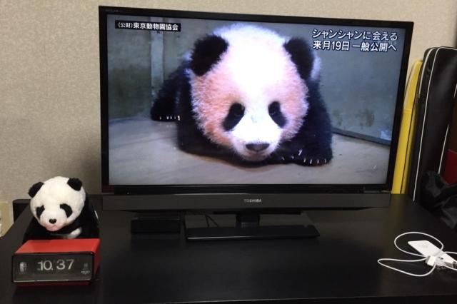 上野動物園のお土産パンダとTVに映ったシャンシャン