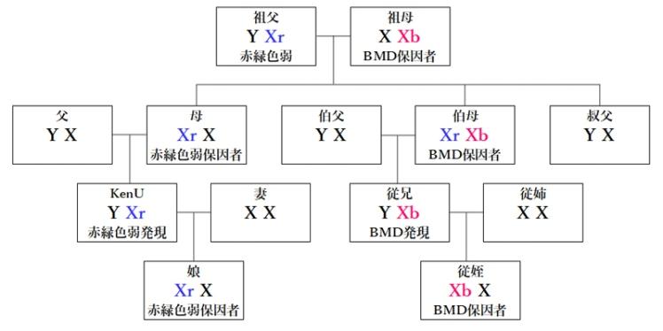 赤緑色弱とBMD遺伝系図